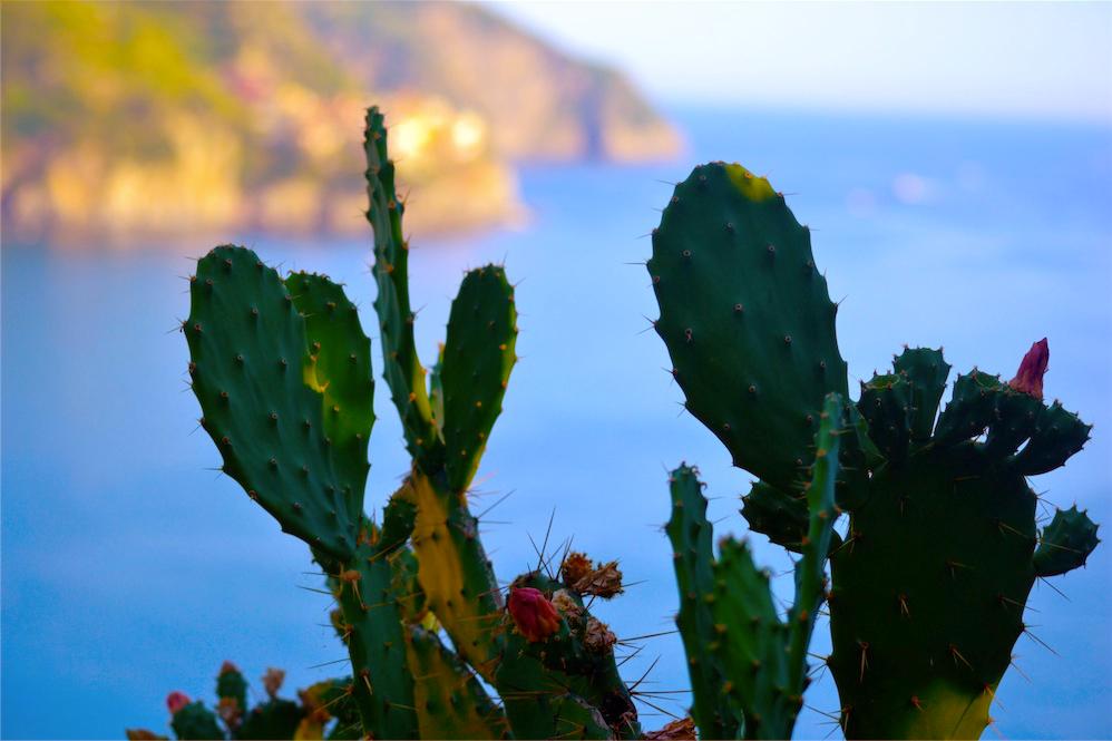 cactuscorniglia