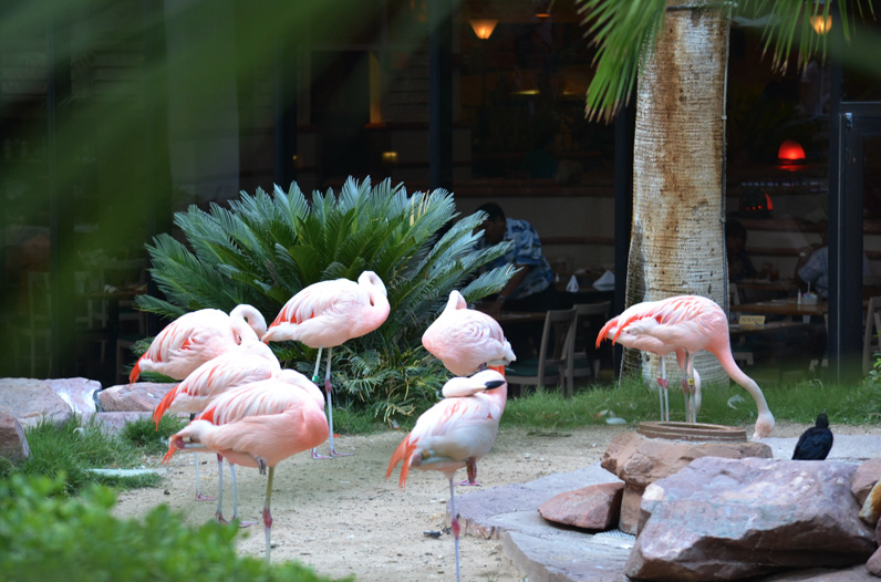 PinkFlamingos-Avis-Decoration