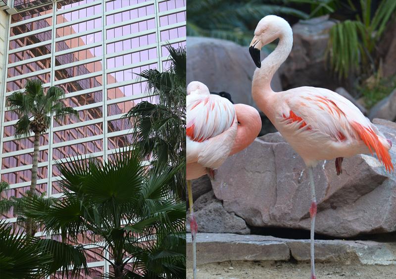 avis-pinkflamingo-hotel