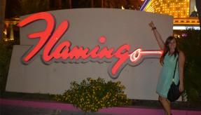 slider-flamingo