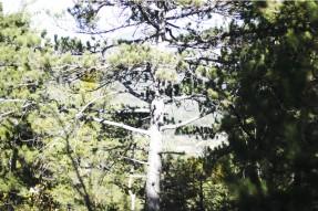inthewoods-saintecroix