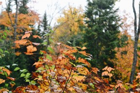 automne_montreal_blogvoyage