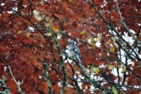 automne_oiseau_quebec