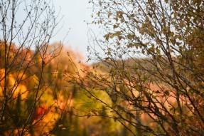 automne_saintagathe