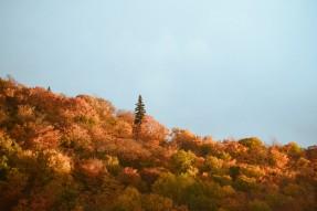 expat_automne_quebec