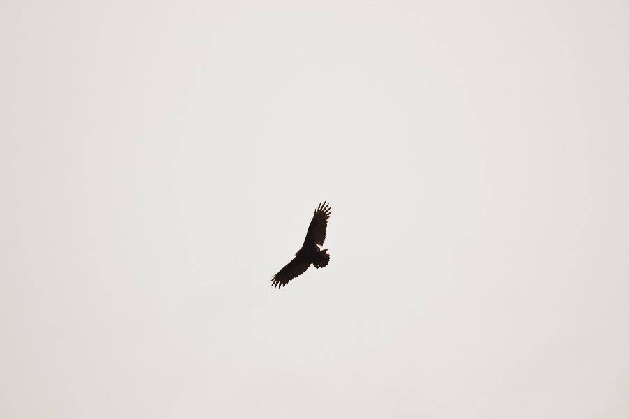 vautour_parc_omega