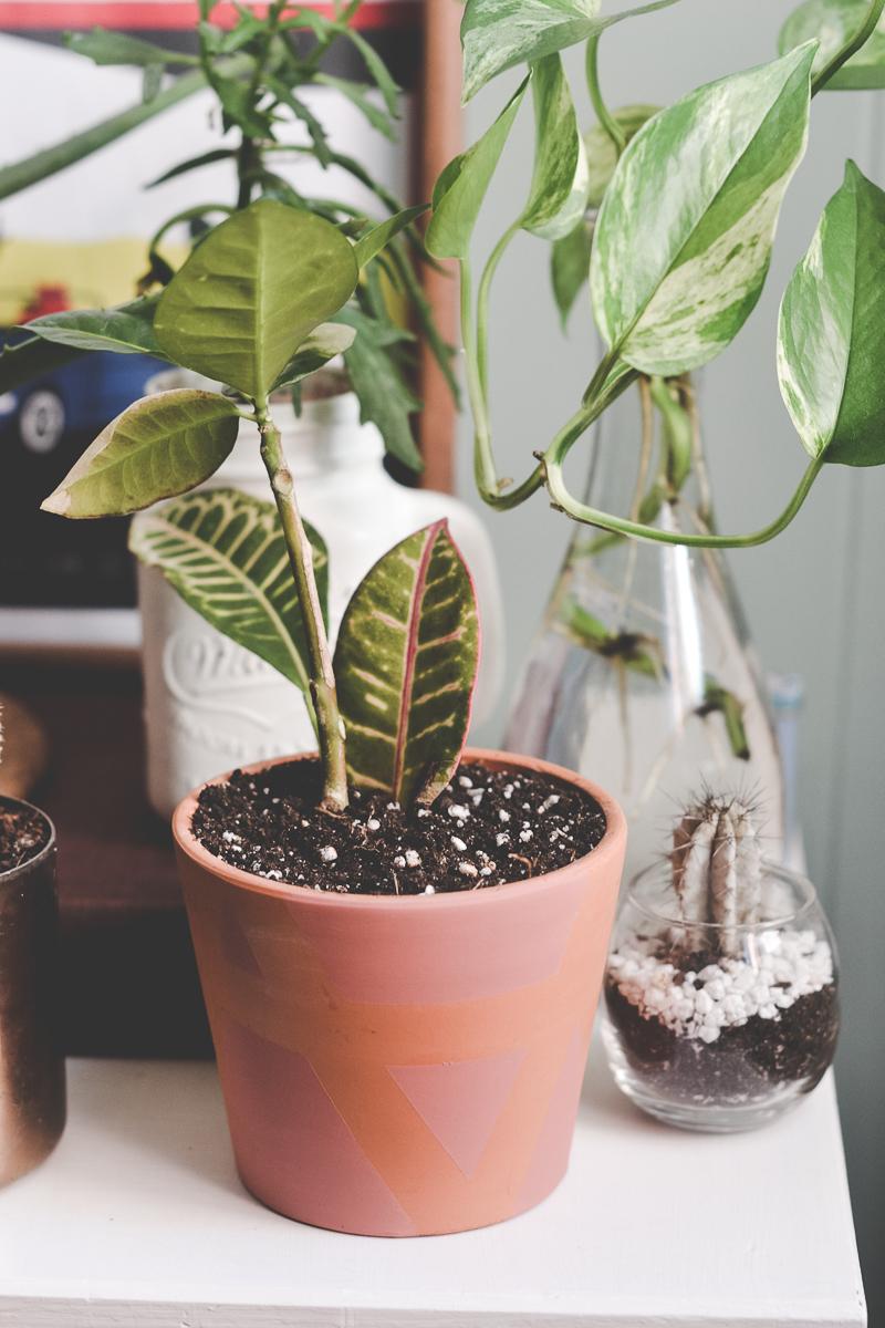 plante-diy-geometrique