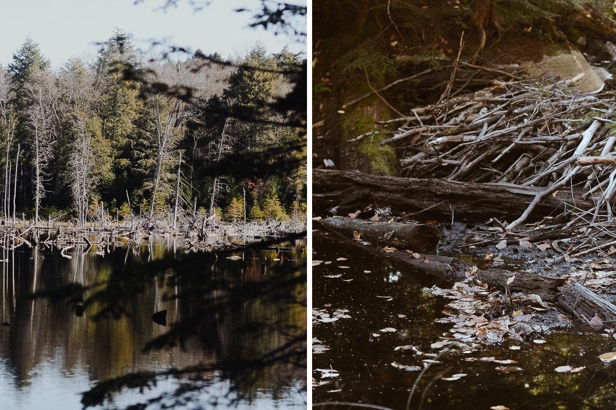 barrages-castor-berges-lac