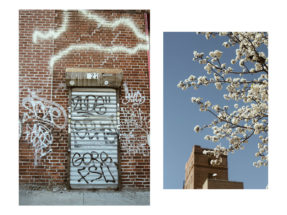brooklyn-balade-printemps-itineraire