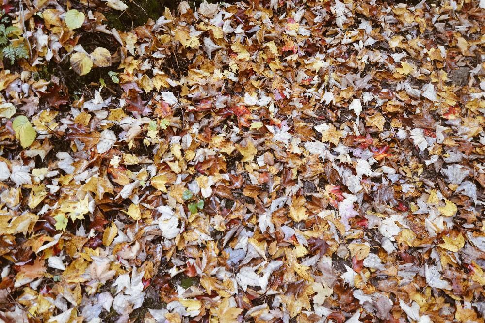 automne_alentours_montreal