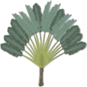 cropped-tree-09-152-191474.png