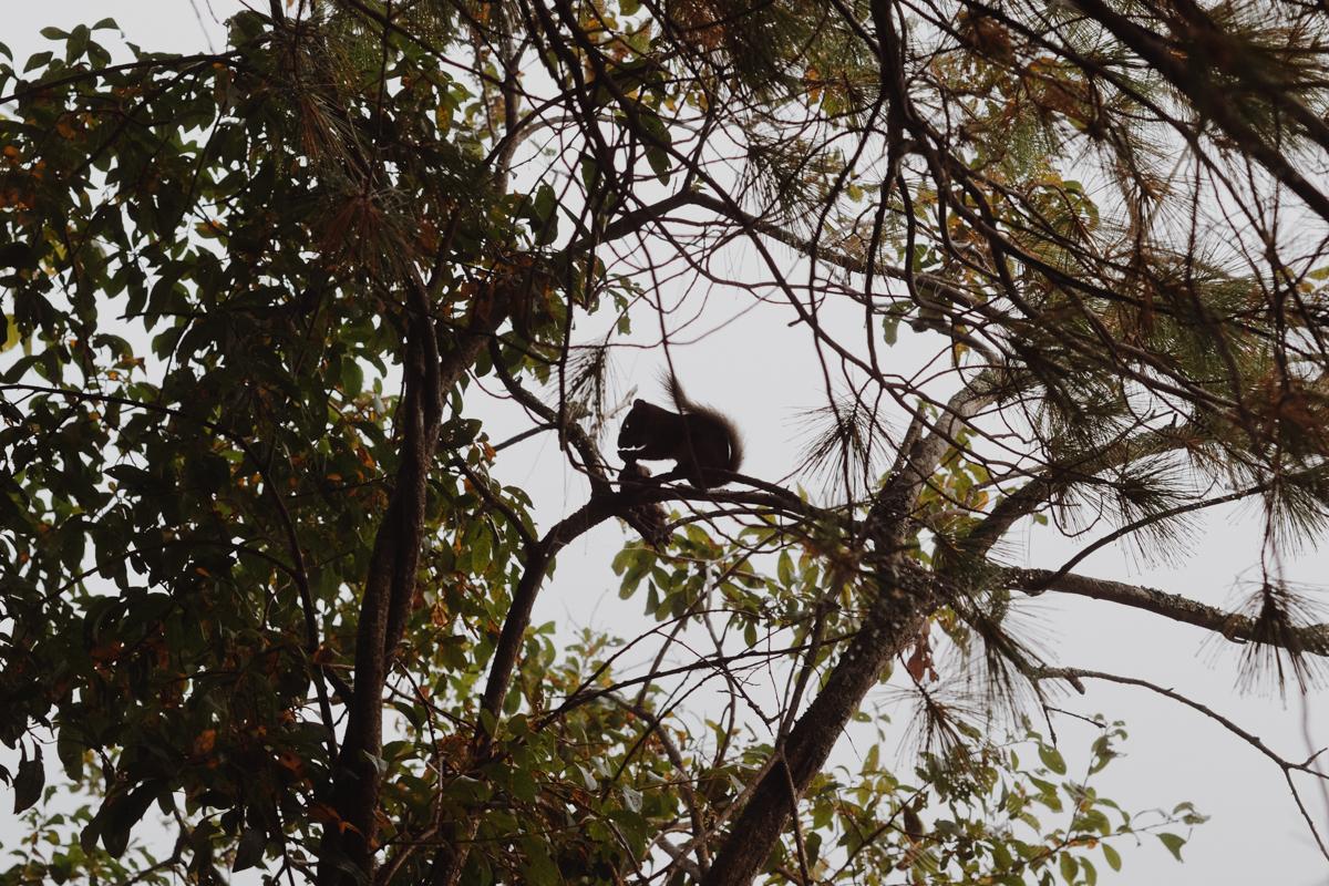 tamia-parc-poissonblanc