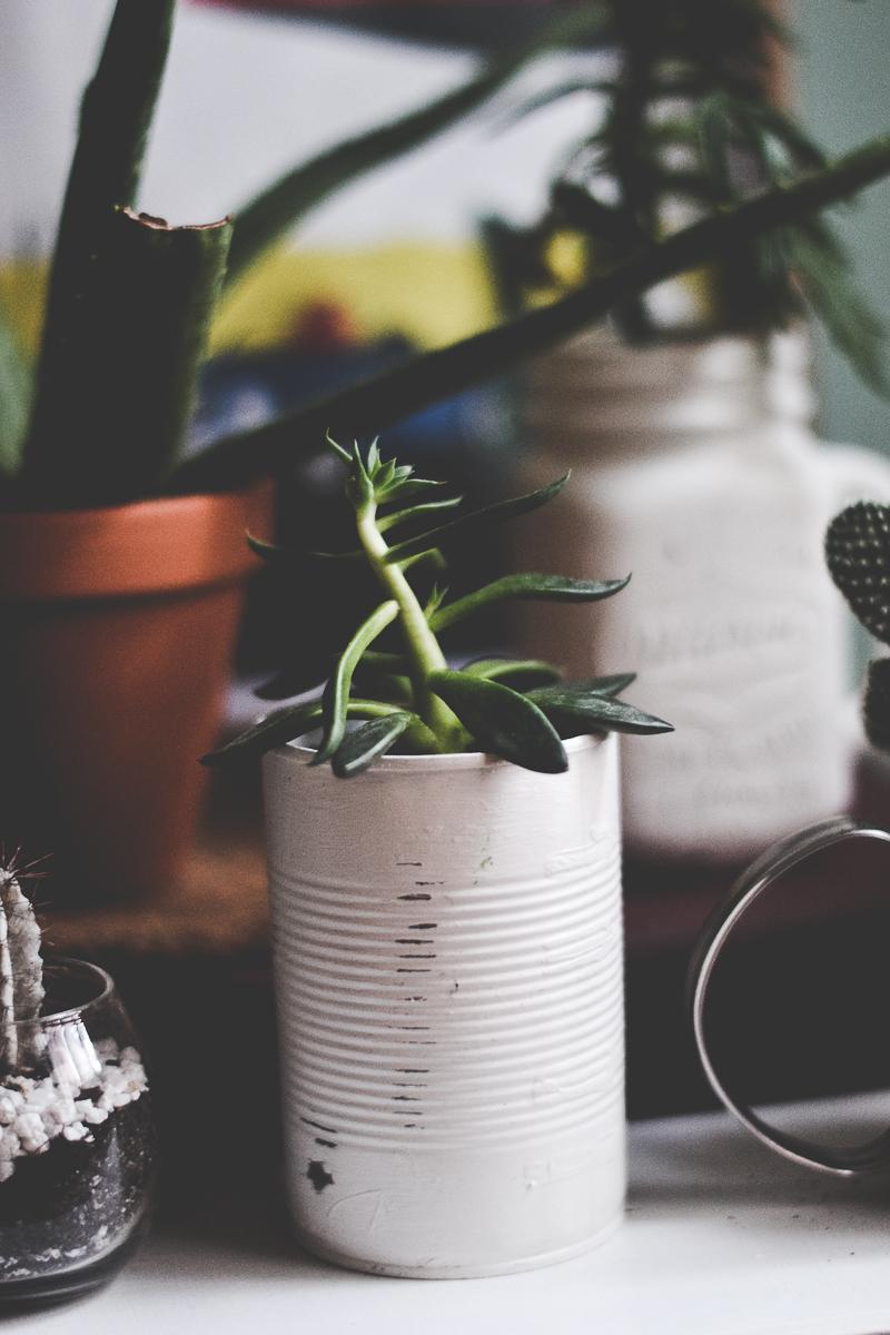 boite-conserve-plante