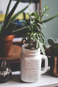 pot-masson-vintage-plante