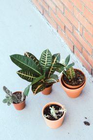 plantes_customisation