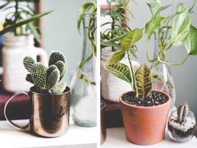plantes_deco_