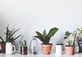 plusieurs-diy-plantes-pots