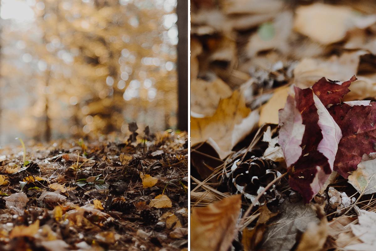 avis-automne-parc-chutes-saint-ursule