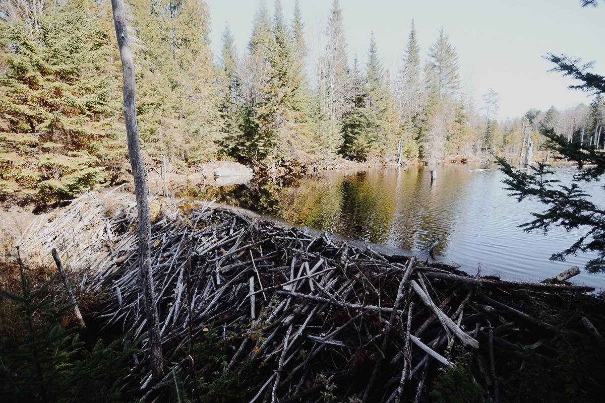 barrages-castor-quebec-mauricie