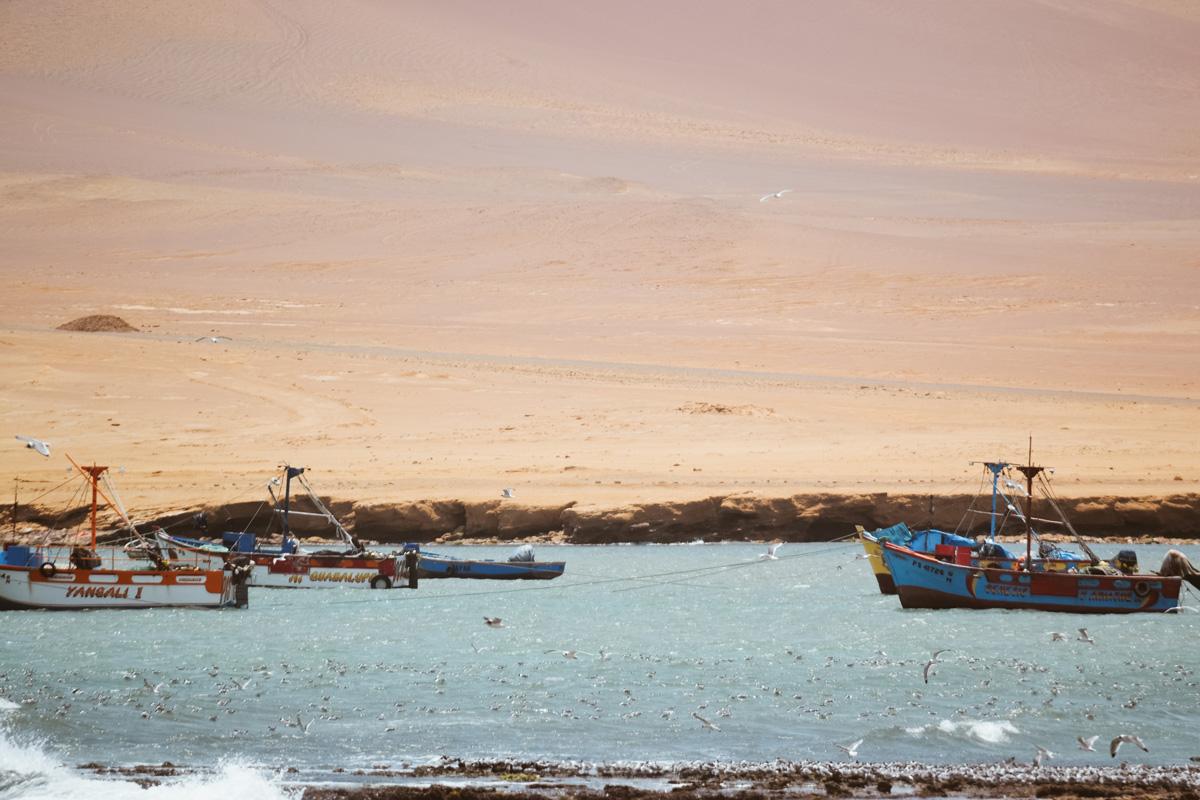 visiter paracas insolite